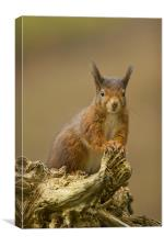 Red Squirrel on rustic log., Canvas Print