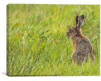 Brown Hare forever alert., Canvas Print