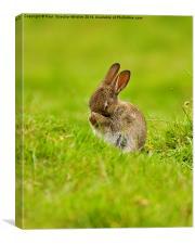 Brown Rabbit, Canvas Print