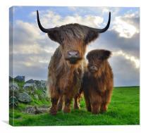 Hairy Cows, Canvas Print