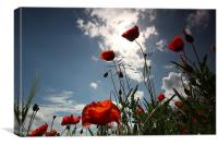 Sunlit Poppies, Canvas Print