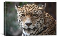 Wild Leopard, Canvas Print