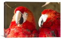 2 Bright Red Parrots, Canvas Print