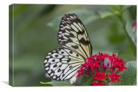 Bright White Butterfly, Canvas Print