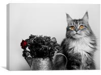 Flower pot cat., Canvas Print