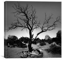 Desert Landscape, Canvas Print