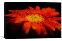 Orange Gerber, Canvas Print