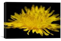 Yellow Thistle, Canvas Print