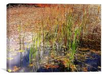Pond and Rushes, Canvas Print