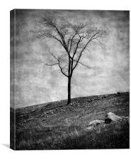 Lonesome Tree, Canvas Print