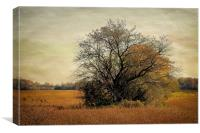 Fall Field, Canvas Print