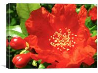Red Pomegranate Flowers, Canvas Print