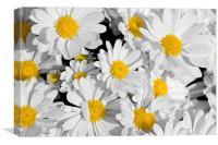 Pretty Daisies, Canvas Print