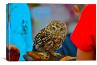 Owl - Strigiformes, Canvas Print