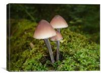 Mushrooms , Canvas Print