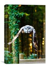 Owl gonna getchya!, Canvas Print
