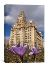 Purple Flowers Liver Building, Canvas Print