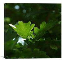 oak leaf, Canvas Print