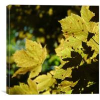 Olive coloured leaves, Canvas Print