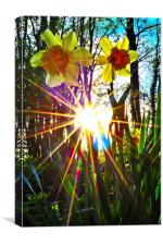 rays of sunshine, Canvas Print