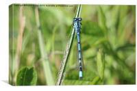 Blue Dragonfly, Canvas Print