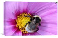 Bumble Bee on Purple Flower, Canvas Print