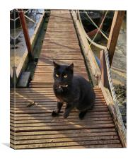 The Boat House Cat, Canvas Print