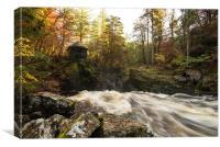 Autumnal Beauty at The Hermitage, Perthshire, Canvas Print