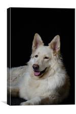 White German Shepherd, Canvas Print