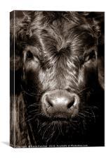 Cow Face , Canvas Print