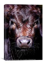 Staring Cow, Canvas Print
