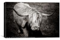 Highland cow in monochrome , Canvas Print