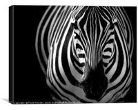 Zebra portrait, Canvas Print