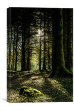 Kielder Forest Trail, Canvas Print