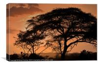 African Sunset, Canvas Print