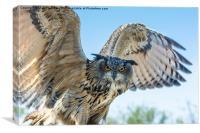 Eastern Siberian Eagle Owl, Canvas Print