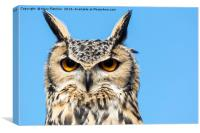 European eagle owl (Bubo bubo), Canvas Print