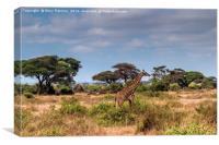 Giraffe in Africa, Canvas Print