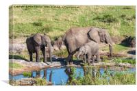 Elephant Family at a watering hole., Canvas Print