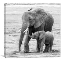Elepant Mother and Calf, Canvas Print