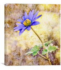 Textured Windflower, Canvas Print