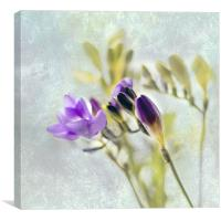 Freesia, Canvas Print