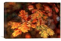 Colours of Oak, Canvas Print