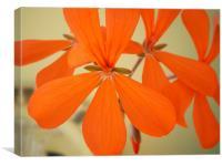 orange blossom special, Canvas Print