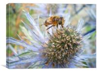 Eryngium and bee , Canvas Print
