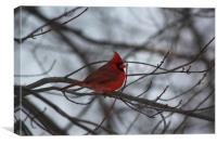 Northern Cardinal, Canvas Print