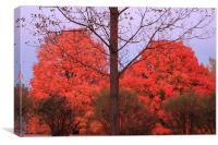 Fall Color, Canvas Print