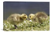 Spring geese, Canvas Print
