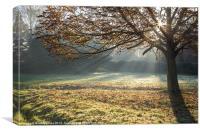 Sun through the mist, Canvas Print