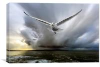 seagull chase, Canvas Print